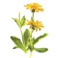 АРНИКА цветы, СК СО2 экстракт, сверкритический, флюидный, Россия, 5 мл