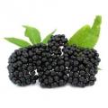 бузина чёрная, ягоды, СК СО2 экстракт, сверкритический, флюидный, Россия, 5 мл
