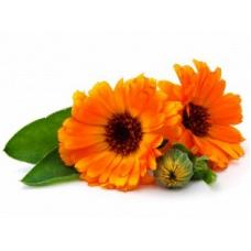 КАЛЕНДУЛА, цветки, СК СО2 экстракт, сверкритический, флюидный, Россия, 5 мл
