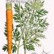 морковь, семена, СК СО2 экстракт, сверкритический, флюидный, Россия, 5 мл