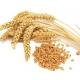 зародыши пшеницы, СК СО2 экстракт, сверкритический, флюидный, Россия, 5 мл