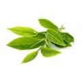 зелёного чая, лист, СК СО2 экстракт, сверкритический, флюидный, Россия, 5 мл