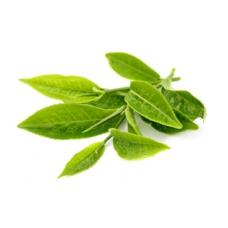 зелёного чая, лист, СК СО2 экстракт, сверкритический, флюидный, Россия, 5 мл, экстрагировано углекислотой под давлением